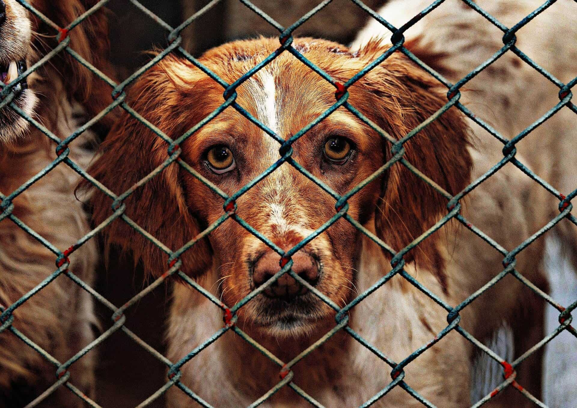 Why Should You Adopt A Rescue Dog?