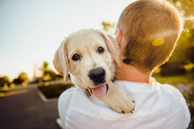 Top 4 Tips To Provide The Best Potty Training To Your Puppy
