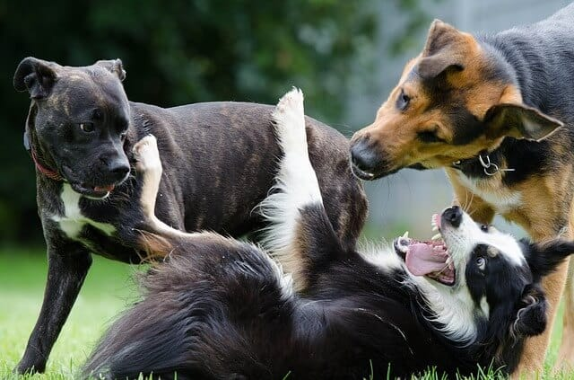 4 Tips To Train Rescue Dogs