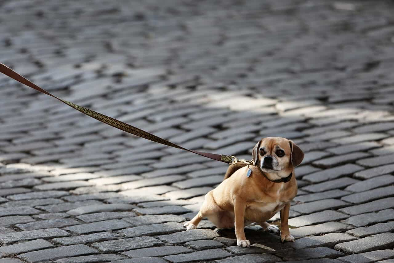 Dog Training: The Best Dog Leashes You Can Buy Right Now