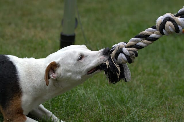 Dog Obedience Training: Top 4 Tips You Must Follow