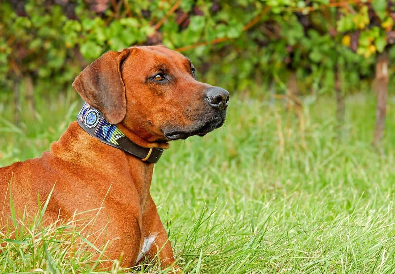 4 Cons Of Dog Shock Collar Every Dog Owner Should Be Aware Of