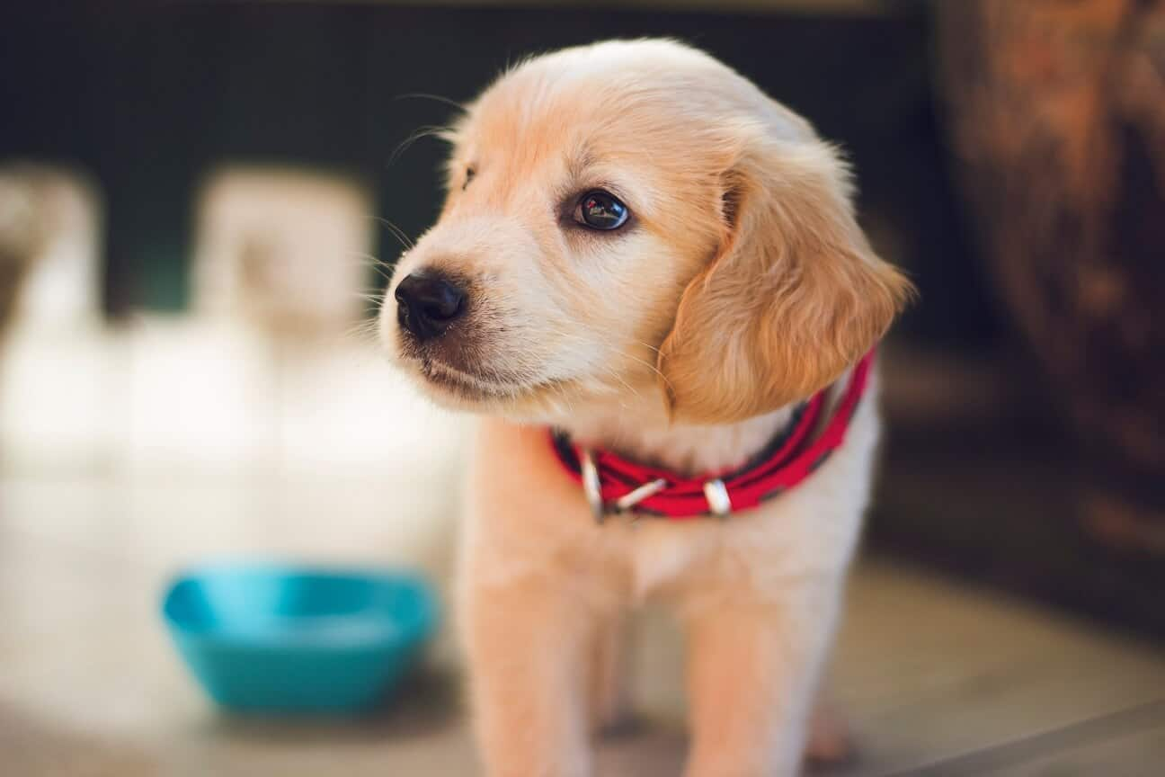 Things You Need To Know Before Buying An Electric Dog Collar