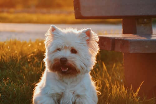 Are Hypoallergenic Dogs Less Sensitive To Allergensives?
