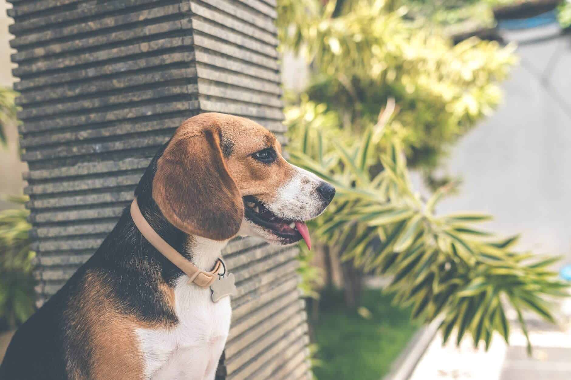 Dog Training Ideas And Techniques- Know More About It