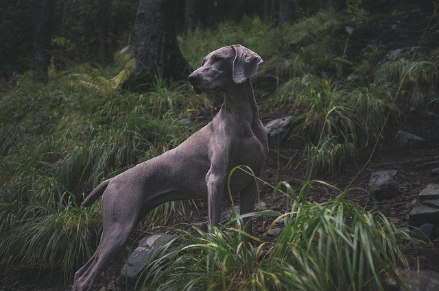 Best Hunting Dogs For Pet Lovers
