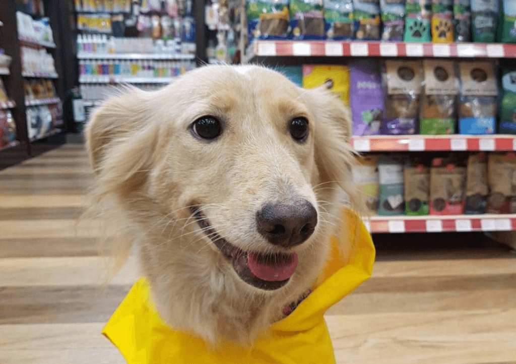 Purchase The Best Dog Products