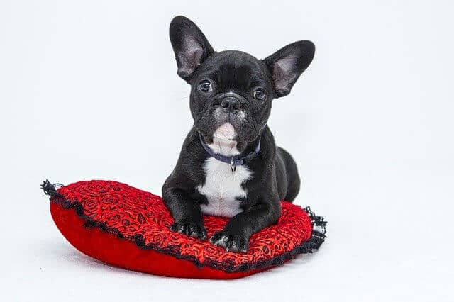 Dog Training Treats For Best Trained Dogs