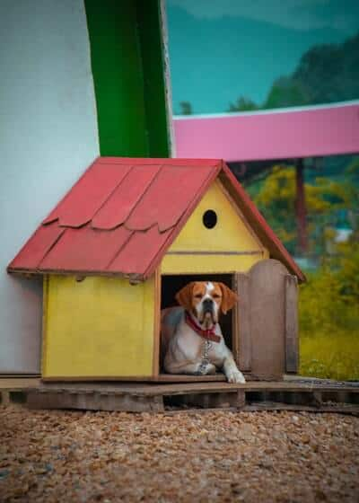 Dog House DIY Plans For Your Furry Friend