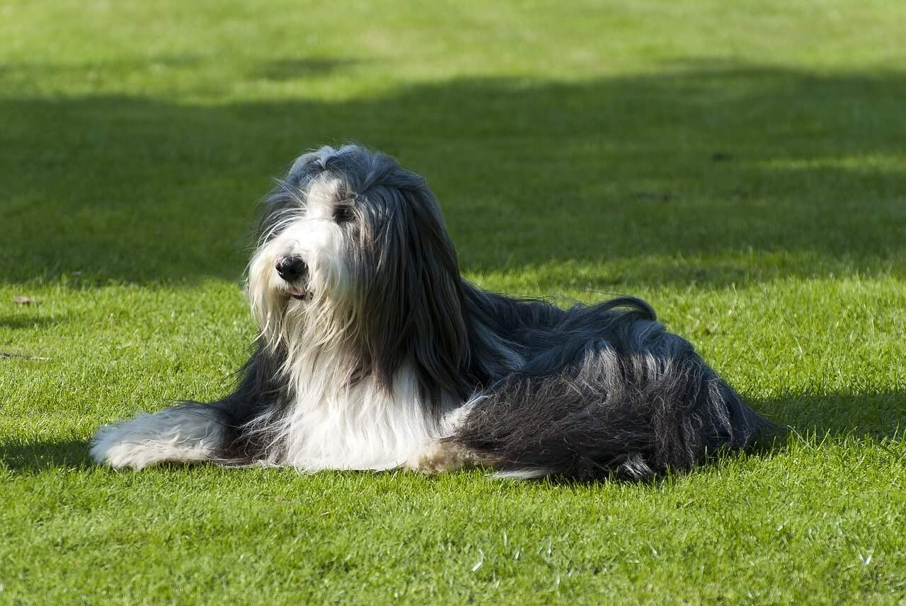 A dog lying on top of a grass covered field