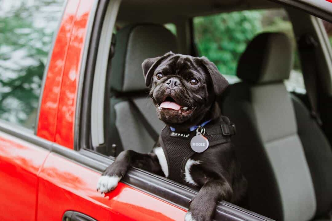 A dog sitting on the side mirror of a car