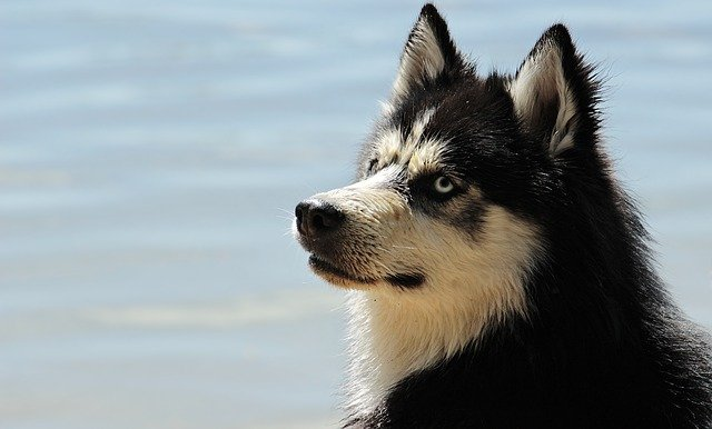A dog sitting in the water