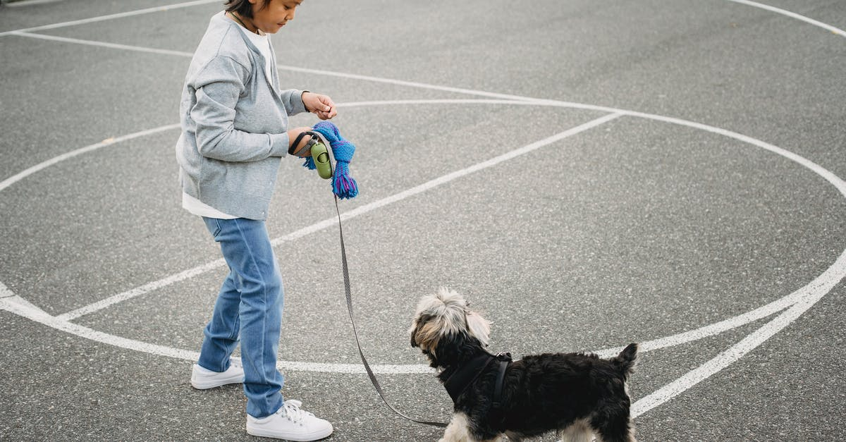 A person holding a dog on a leash