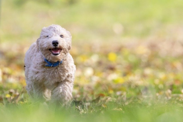 A small dog standing on grass