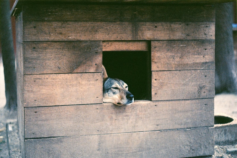 A dog sitting on top of a wooden door