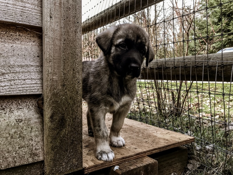 A dog that is standing in front of a fence