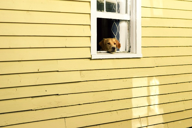 A dog sitting in front of a window